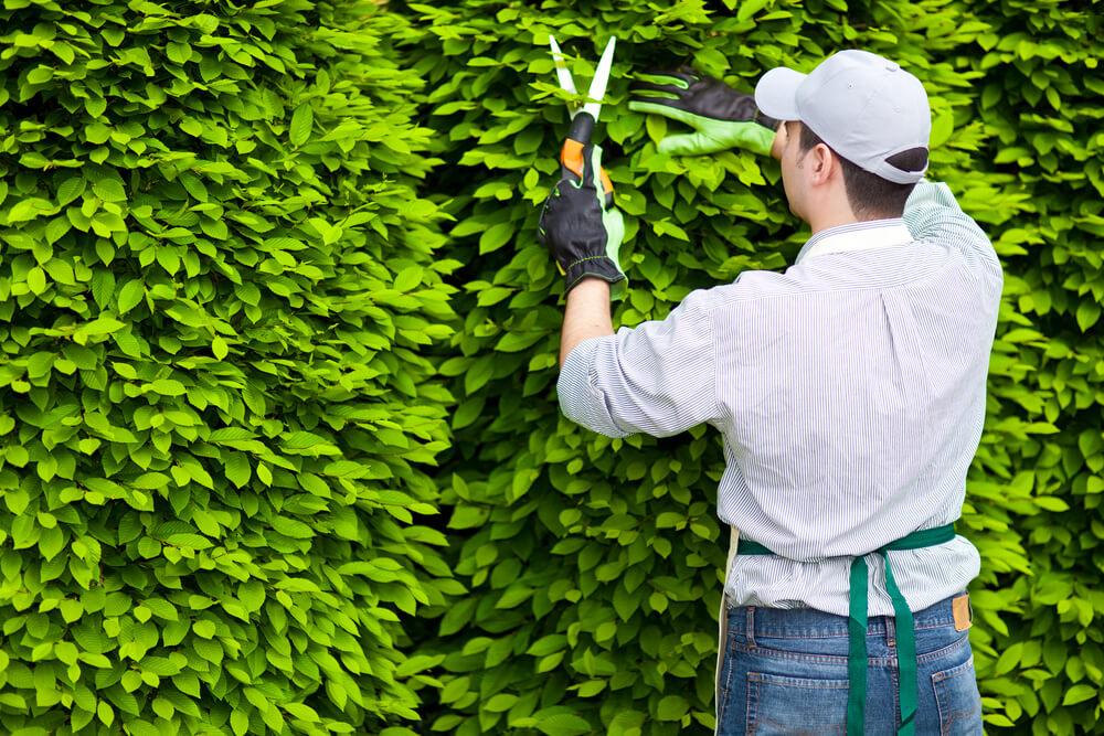 Vagas de Emprego para Jardineiro